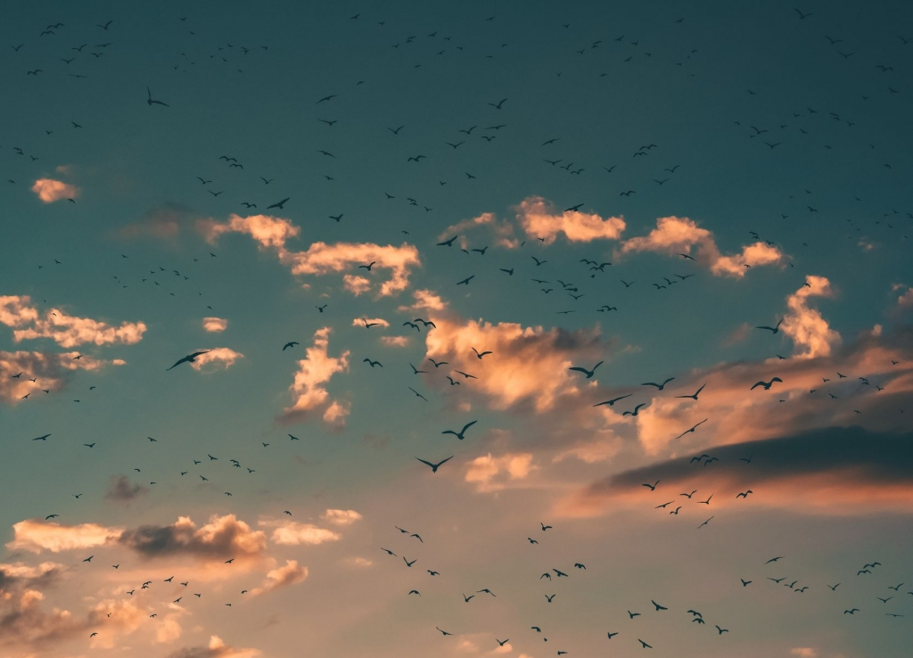 Oiseaux sous le couché de soleil